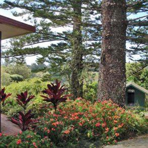 Amongst the Pines – Norfolk Island