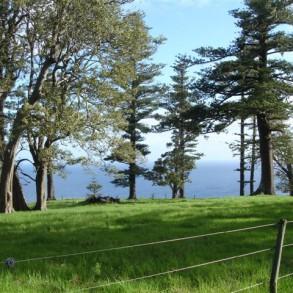 Land Breathtaking Views ~ Norfolk Island