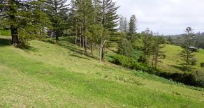 Lush Land on Norfolk Island
