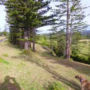 Lush Land on Norfolk Island