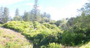 Bargain Building Block ~ Norfolk Island